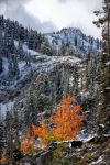 Bright Orange and Snow by mjohanson