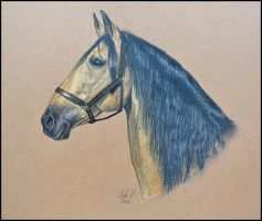 Drawing- Lusitano horse by Ennete