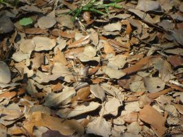 Day 85: Dead Leaves by Caedy