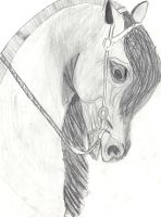 horse by phee-evans