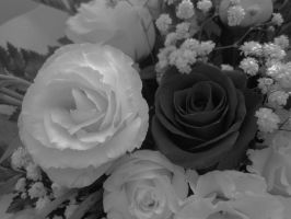 Roses in black and white by DanicaWish