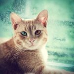 My Ginger Cat by the-little-boo