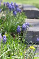 spring flowers by Cassidy-Slingby