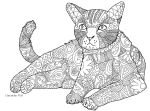 Colouring Cat by violet-greenacre