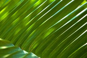 Backlit Fronds by ChimeraDragonfang