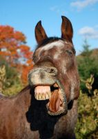 The Jackass In Me by equineinnocence