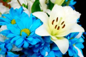 White And Blue Flowers by LDFranklin