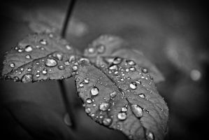 Rainy Day Leaves by pinknfuzzy4711
