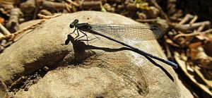 Dragonfly by itryitworks
