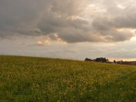 Field at Sunset stock 3 by little-spacey