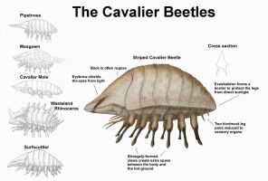REP: The Cavalier beetles by Ramul