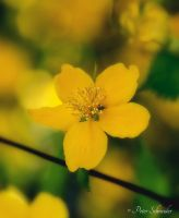 Yellow. by Phototubby