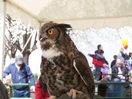 Great Horned 2 by Owlheart