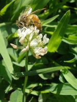 Bee on the 'weed' by ThruTheLens811