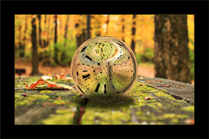 Glass Sphere in the forest by dani8190