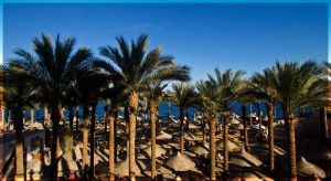 Palms in the sun by sKodOne