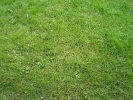 Texture: Grass by ivelt-resources