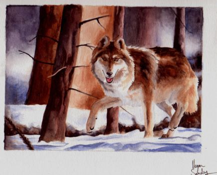 Mexican Wolf- art trade by cracka-JACK