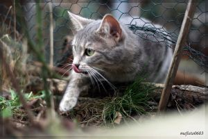 hunter cat by mefisto0603