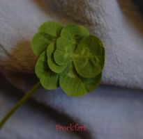 Seven leaf clover by FrockTarts