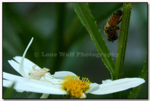 David and Goliath  +up close+ by LoneWolfPhotography