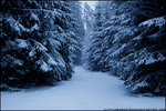 Winterland Forest by littlemewhatever