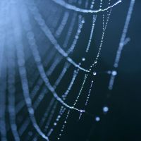 spiderweb by myalcatraz