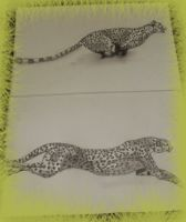 Cheetah's locomotion by Tiguere