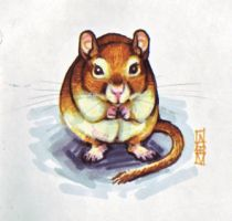 Gerbil. by littlecrow