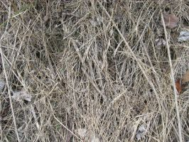 Texture Dead Grass 1 by markopolio-stock