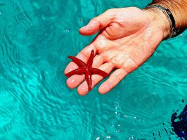 Red Starfish by AlbRai78