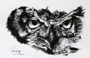 Owl sketch by MrEverythings