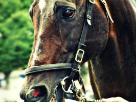 Flared Thoroughbred by Meadhag