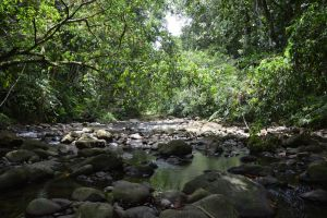 In middle of guadeloupian River and forest by A1Z2E3R