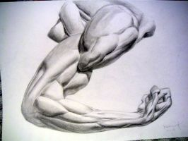 Arm Muscle Study by koanne