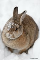 Bunny at snow by Bastlwastl84