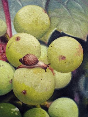 Grapes of Wrath :Snail Style: by IdaliaMay
