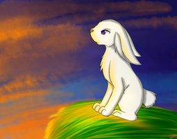 hare watching the sunset by torikaze