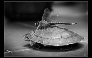 Mr Turtle and the Dragonfly by deranged-mongoose