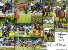 Local Horse Magazine 2012 by angel-brittony-adams