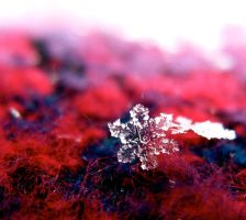 Snowflake by freedom2sing