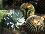 cactus by mimose-stock