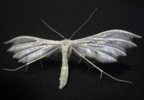 feather moth by Tribolonotus