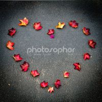 Love Fall by photosopher