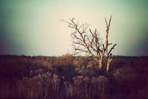 The dead tree ... by ChristineAmat
