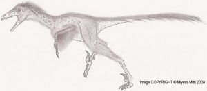 Sinornithosaurus by Miyess