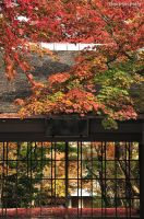 Autumn at Japanese Spa by WindyLife