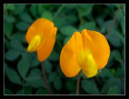 Yellow flower by KatiaST
