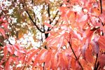 Autumn Leaves Wallpaper by crane14