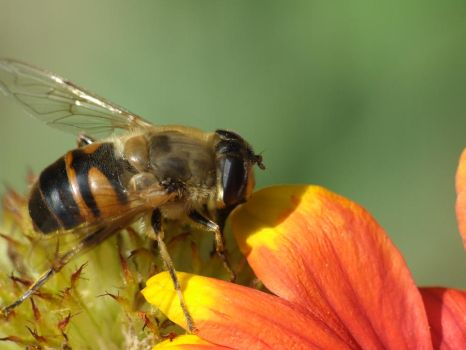 busy bee by Severia111